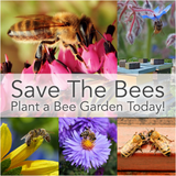 Save the Bees! Plant a