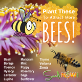 Plant THESE To Attract More BEES!