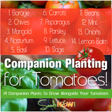 14 Companion Plants to Grow With Your Tomatoes!