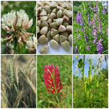 What Are COVER CROPS and Why Should I Plant Them in My Garden??