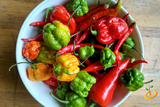 15 Super HOT Varieties Every Pepper Enthusiast Must Try!