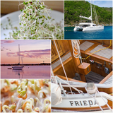 How do I Grow SPROUTS & MICRO-GREENS on a Liveaboard Sailboat Yacht?