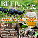 BEER; An Effective Method for Slug Control [Who Knew!?]
