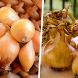 Shallots vs. Onions, What's The Difference?