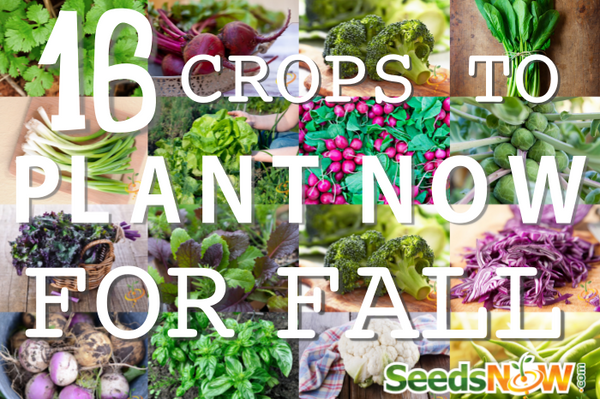 16 Crops To Plant NOW for Fall!