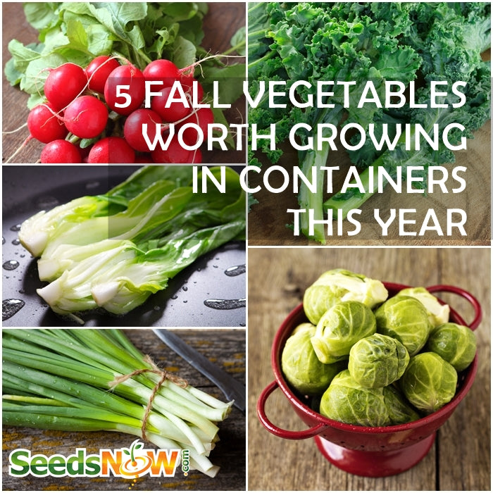 Best Vegetables To Grow In Raised Beds: 5 Fall Vegetables Worth Growing In Containers This Year