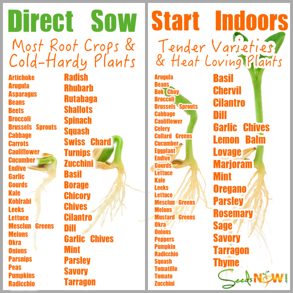 How do i know which seeds to direct sow and which to seeds to start in now that your seeds have arrived you may wonder which varieties are best suited for directly sowing into your garden outdoors and which ones do best when workwithnaturefo