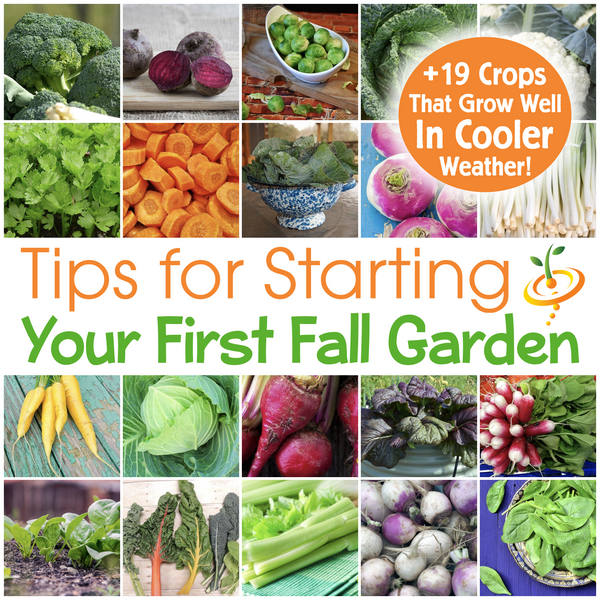 Tips For Starting Your First Fall Garden & 19 Crops That