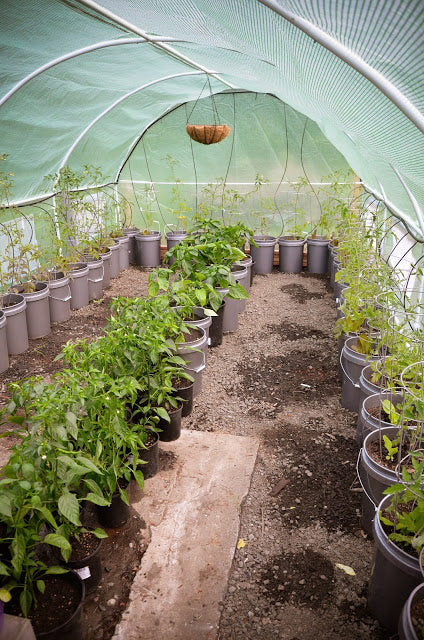 6 Tips For Gardening In Containers