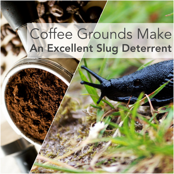 If Slugs Are Getting The Best Of Your Tender Young Leaves Inside Of Your Vegetable  Garden, Try Placing Some Used Coffee Grounds As A Barrier On Top Of The ...