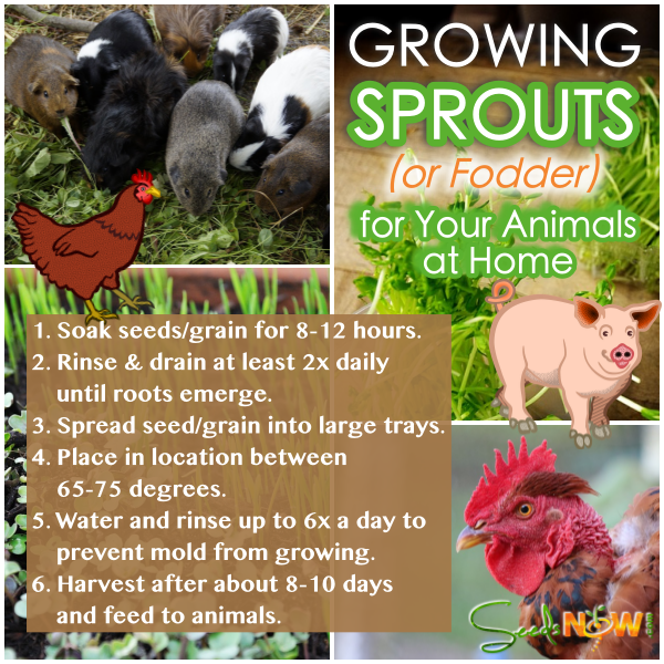 How To Supplement Your Animal Feed by Growing Fodder at Home