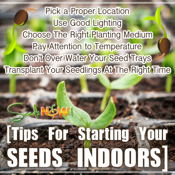 Tips for successfully starting your seeds indoors this page should be read after reading guide to starting seeds indoors starting your seeds indoors is a great way to get a jump start on your garden workwithnaturefo