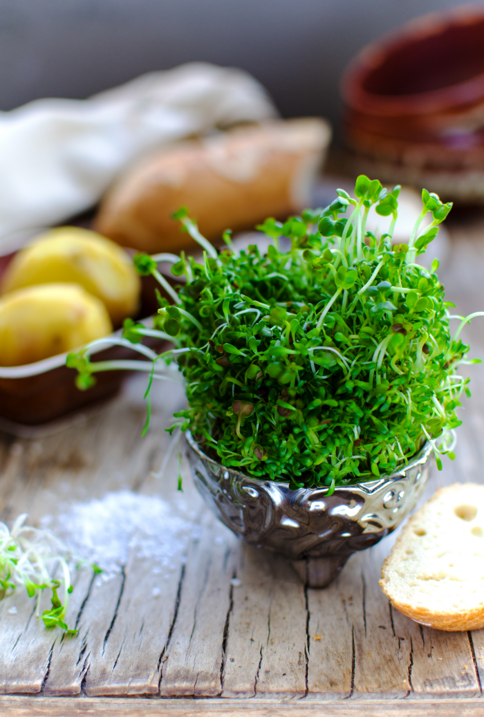 How to Grow Sprouts Easily at Home Using a Mason Jar