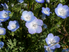 Wildflowers - Moist Area Scatter Garden Seed Mix