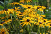 Wildflowers - Deer Resistant Scatter Garden Seed Mix