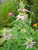 Wildflowers - Fragrant Flower Scatter Garden Seed Mix