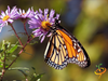 Wildflowers - Hummingbird & Butterfly Scatter Garden Seed Mix