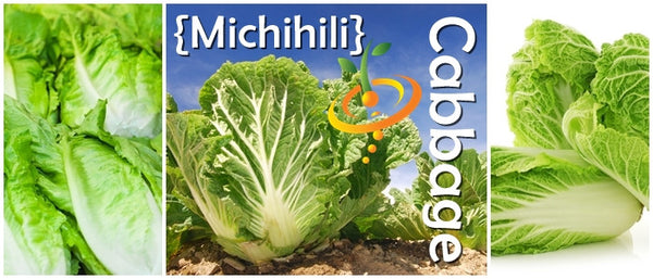 Cabbage Michihili Seedsnow Com