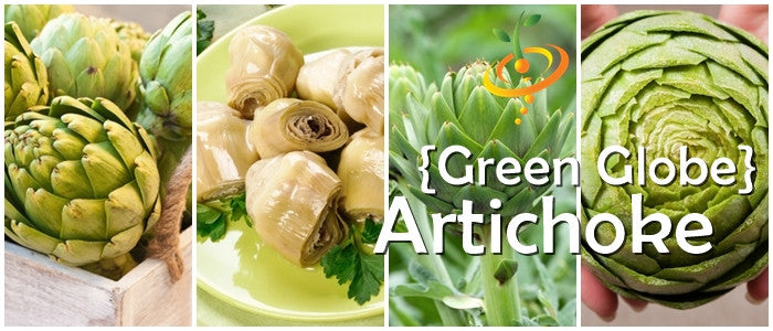 Grow Green Globe Artichoke seeds 100% Heirloom/Non-Hybrid/Non-GMO