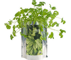 Cilantro Grow Kit