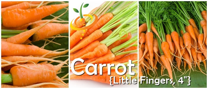 Organic non-gmo Little Finger Carrot 100+Seed only 3 inch long Buy 2 get 1 free