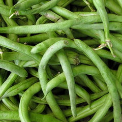 Bean (Bush) - Slenderette