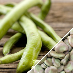 Bean (Fava/Pole) - Broad Windsor