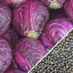 Cabbage - Acre, Red