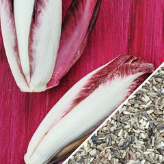 Chicory - Verona, Red