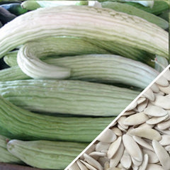 Cucumber - Armenian, White (Metki Serpent Melon)