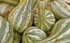Squash (Winter) - Crookneck, Cushaw Green Striped