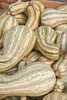Squash - Crookneck, Cushaw Green Striped