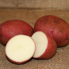Potato - Dark Red Norland (Organic/Heirloom)