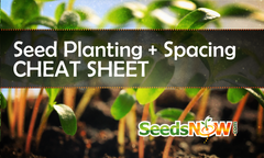 Seed Planting & Spacing Cheat Sheet