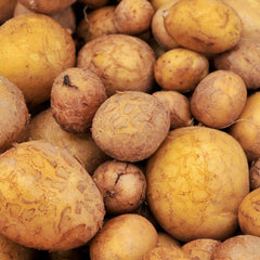 Potato - German Butterball (Organic/Heirloom)
