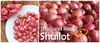 Shallot (sets) - Holland Red