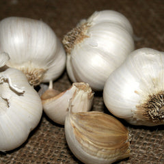 Garlic - Italian Late Softneck