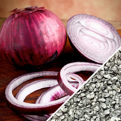 Onion - Red Burgundy