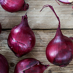 Onion (Sets) - Wethersfield, Red