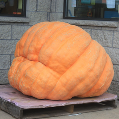 Pumpkin - Pacific Giant