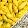 Pepper - Habanero Lemon