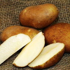 Potato - Pioneer Russet (Organic/Heirloom)