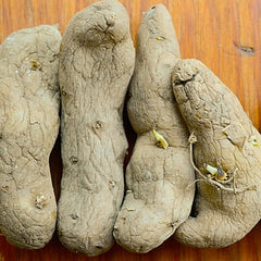 Potato, Fingerling - Austrian Crescent (Organic/Heirloom)