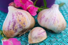Garlic - (Soft Neck) Early Purple Italian