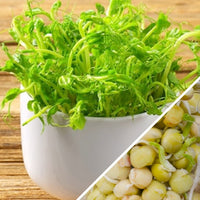 Sprouts/Microgreens - Green Pea