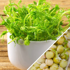 Sprouts - Green Pea