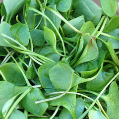 Sprouts - Watercress