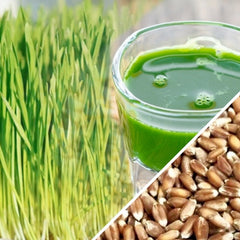 Sprouts - Wheat Grass & Wheat Berries