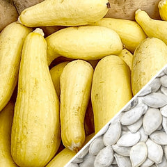 Squash (Summer) - Crookneck, Yellow Early Summer