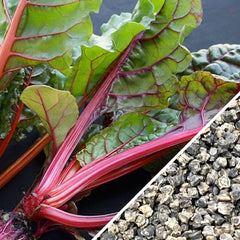 Swiss Chard - Magenta Sunset